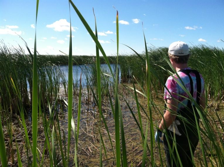 Andy-McCabe-restored-wetland-5-14-2014